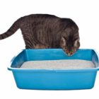 Removes Litter Box Odors